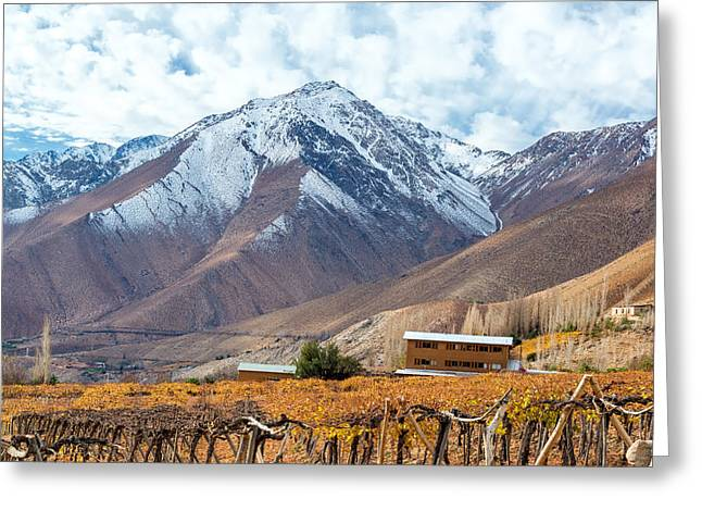Grape Vineyards Greeting Cards - Grape Vines and Mountains Greeting Card by Jess Kraft