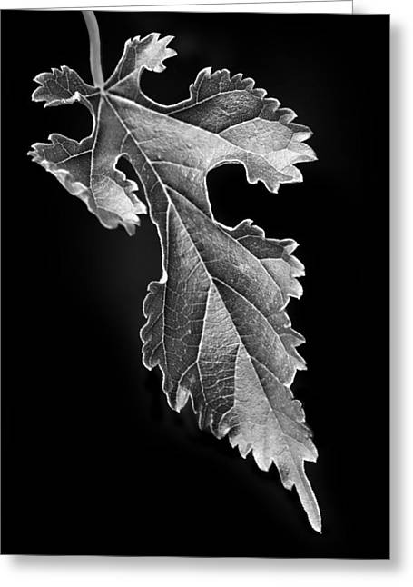 Grape Leaves Photographs Greeting Cards - Grapeleaf Anemone Greeting Card by Nikolyn McDonald