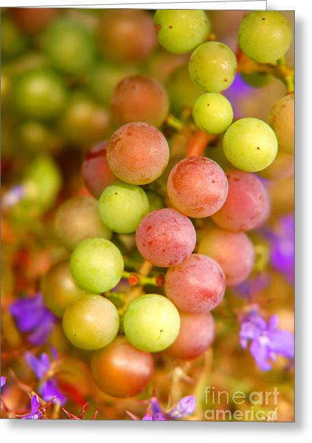 Pinot Noir Greeting Cards - Grapes background Greeting Card by Michal Bednarek