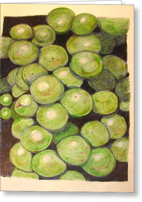 Grapes In Progress Greeting Card by Joseph Hawkins