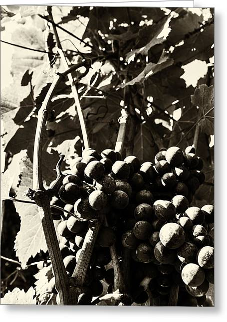 Winery Photography Greeting Cards - Grapes in Sepia Greeting Card by Georgia Fowler