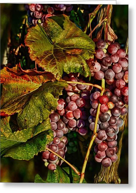 Morning Sun On Vines Photographs Greeting Cards - Grapes in the Morning Sun Greeting Card by Martin Belan