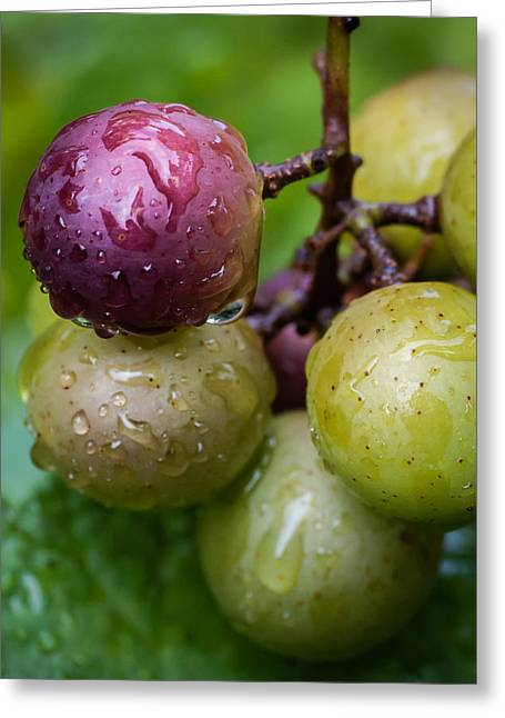 Clusters Of Grapes Greeting Cards - Grapes in the Rain Greeting Card by James Barber