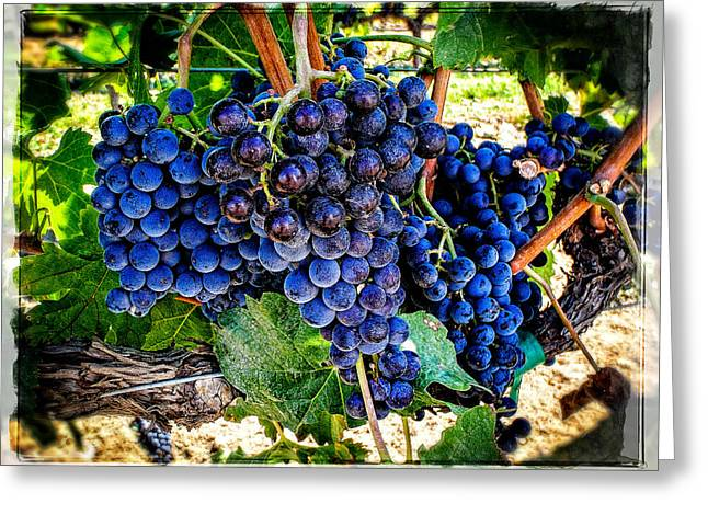 Blue Grapes Photographs Greeting Cards - Grapes Of Art 1 Greeting Card by Roxy Hurtubise