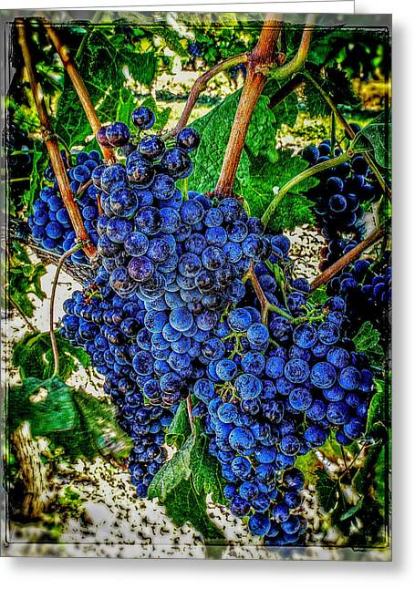 Cluster Of Grapes Greeting Cards - Grapes Of Art 2 Greeting Card by Roxy Hurtubise