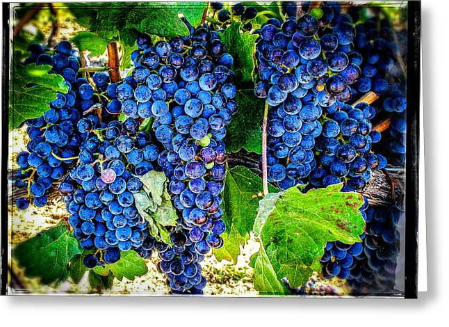 Blue Grapes Photographs Greeting Cards - Grapes Of Art 3 Greeting Card by Roxy Hurtubise
