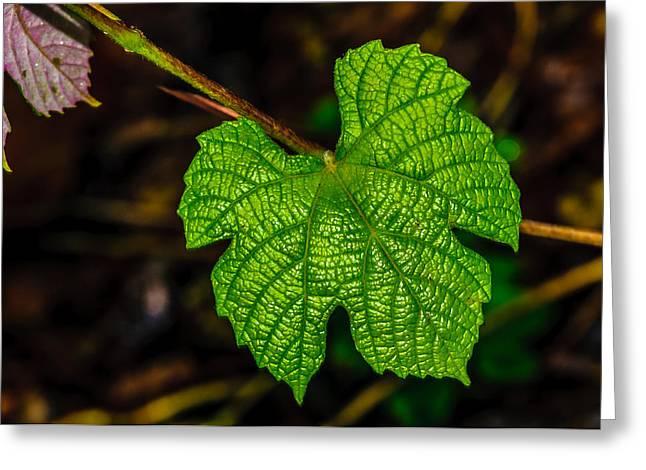 Grape Leaf Greeting Cards - Grapes of Rath Greeting Card by Louis Dallara