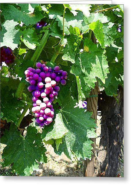 Grape Cards Greeting Cards - Grapes Of Tuscany Italian Winery  Greeting Card by Irina Sztukowski