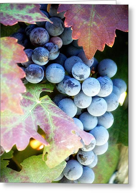 Hall Vineyards Greeting Cards - Grapes of Wrath Greeting Card by WALL Photography and Design