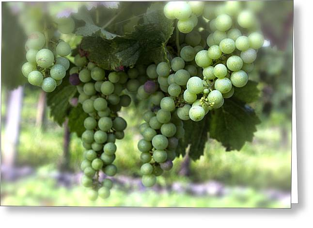 Grape Vine Greeting Cards - Grapes on a Vine Greeting Card by Nomad Art And  Design