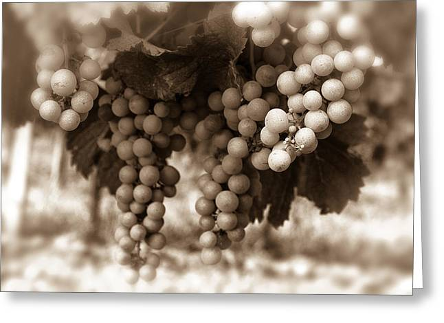 Grape Vineyards Greeting Cards - Grapes on a Vine - Toned Greeting Card by Nomad Art And  Design
