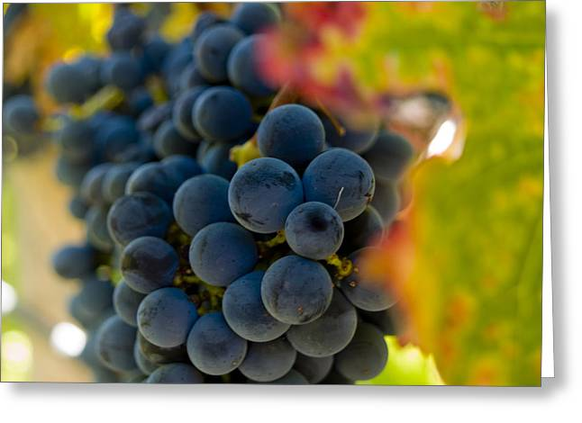 Winery Photography Greeting Cards - Grapes On The Vine Greeting Card by Bill Gallagher