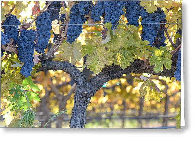 Grapevine Autumn Leaf Greeting Cards - Grapes on the Vine Greeting Card by Brandon Bourdages