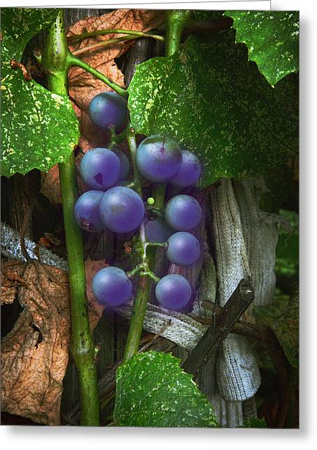 Concord Greeting Cards - Grapes On The Vine Greeting Card by Brian Wallace