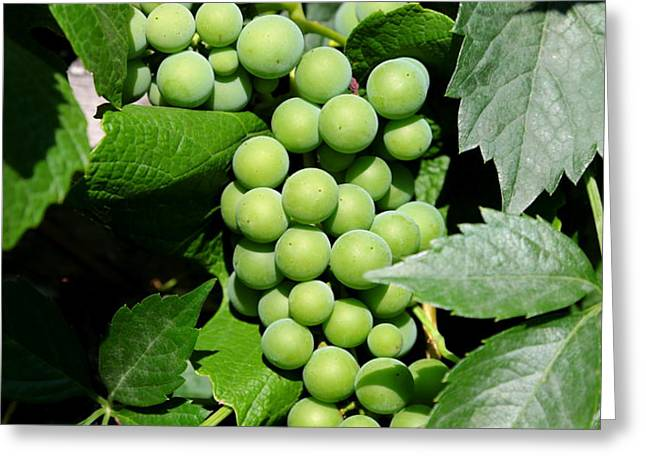 Grapes on the Vine Greeting Card by Carol Groenen