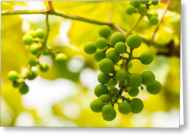 Grapes On The Vine - Finger Lakes Vineyard Greeting Card by Photographic Arts And Design Studio