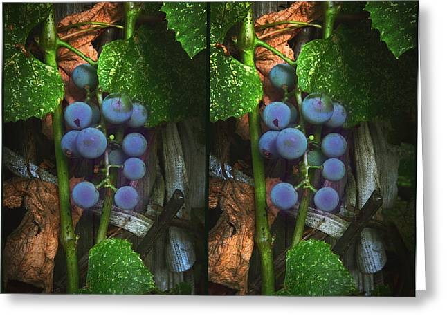 Concord Grapes Digital Greeting Cards - Grapes On The Vine - Gently cross your eyes and focus on the middle image Greeting Card by Brian Wallace