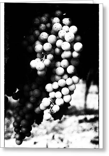 Grape Vine Greeting Cards - Grapes on the Vine in Mono Greeting Card by Nomad Art And  Design