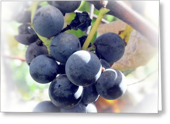 Grapes On The Vine Greeting Card by Kathleen Struckle