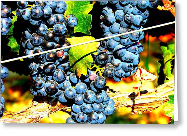 Wapato Photographs Greeting Cards - Grapes on the Vine Greeting Card by Kay Gilley