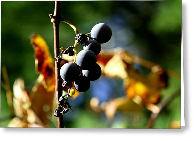 Neal Eslinger Greeting Cards - Grapes on the Vine No.2 Greeting Card by Neal  Eslinger