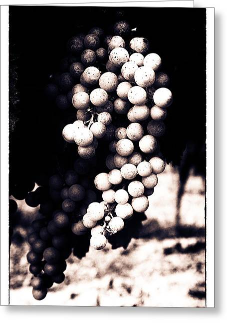 Grape Vineyard Greeting Cards - Grapes on the Vine - Toned Greeting Card by Nomad Art And  Design