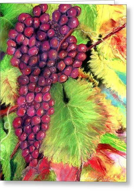 Sonoma Pastels Greeting Cards - Grapes on Vine Pastel Greeting Card by Antonia Citrino