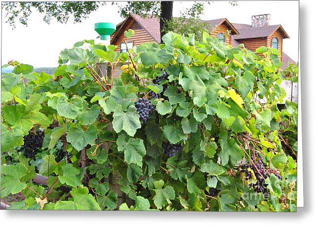 Grapes Ready For Harvest On The Vine Greeting Card by ARTography by Pamela Smale Williams