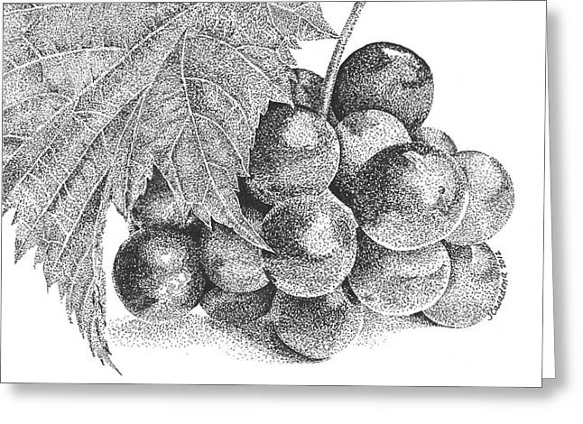 Grape Vines Drawings Greeting Cards - Grapes Greeting Card by Tam Casadona