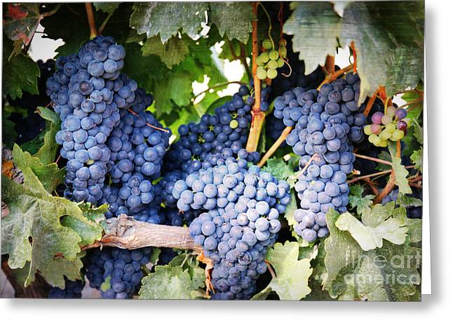 Grape Vineyard Greeting Cards - Grapes with Textures Greeting Card by Carol Groenen