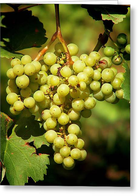 Winemaking Greeting Cards - Grapes - Yummy and Healthy Greeting Card by Christine Till
