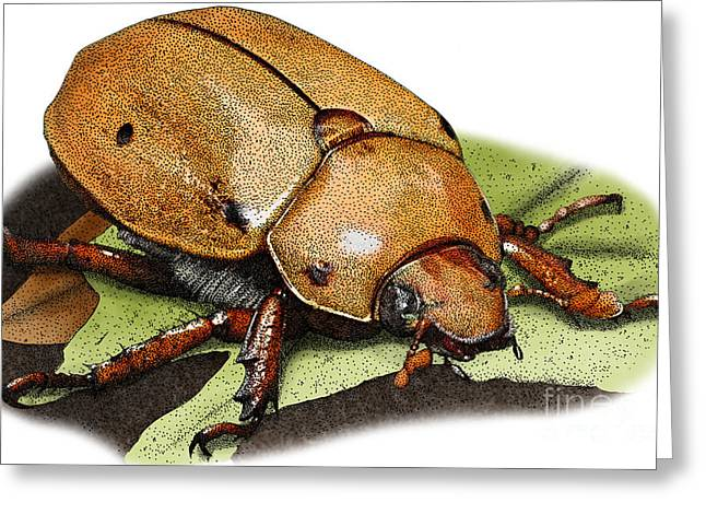 Grapevines Greeting Cards -  Illustration of a Grapevine Beetle Greeting Card by Roger Hall