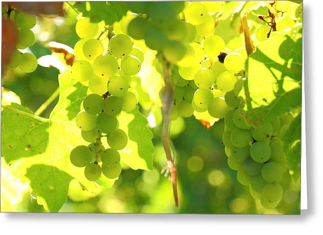 Bunch Of Grapes Greeting Cards - Grapevine Greeting Card by Ursula Coccomo