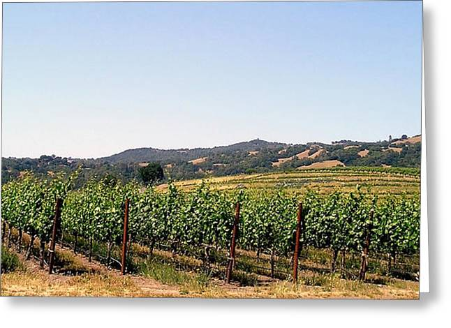Nappa Valley Greeting Cards - Grapevines. Greeting Card by Oscar Williams