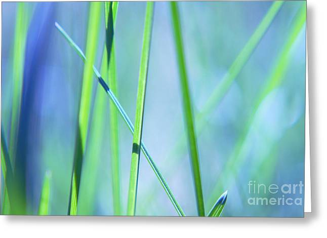 Aimelle Photographs Greeting Cards - Grass Abstract - 0102a Greeting Card by Variance Collections