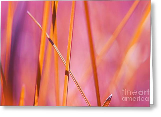 Grass Greeting Cards - Grass Abstract - 03439 Greeting Card by Variance Collections