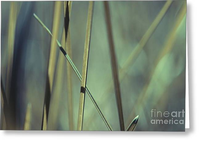 Grass Abstract - 03439gr Greeting Card by Variance Collections