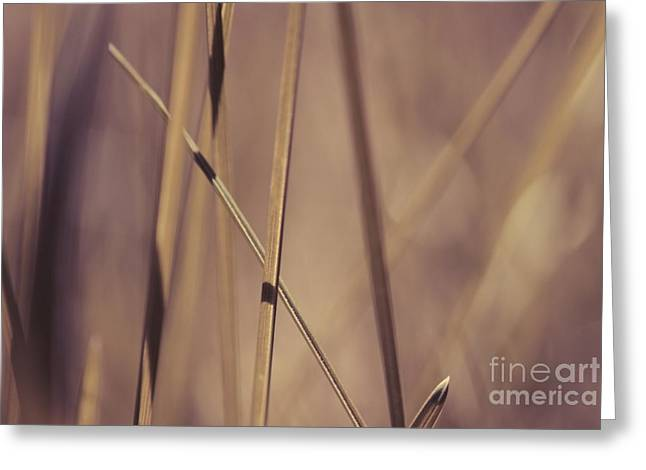 Aimelle Photography Greeting Cards - Grass Abstract - Bruni 01 Greeting Card by Variance Collections
