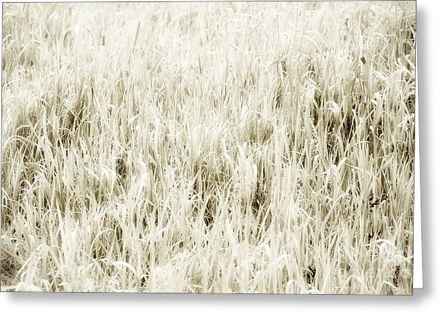 Uncut Greeting Cards - Grass abstract Greeting Card by Elena Elisseeva