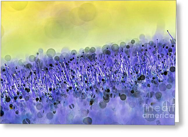 Total Abstract Greeting Cards - Grass abstract Greeting Card by Tony Cordoza