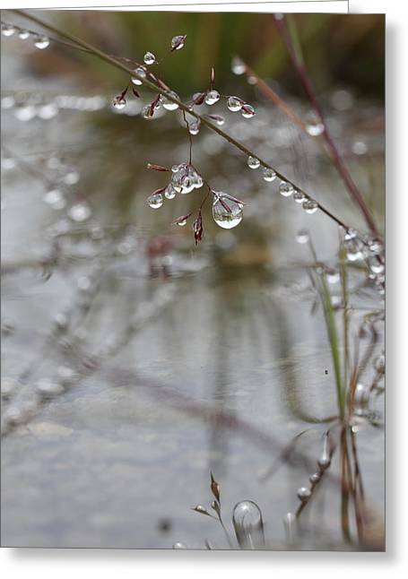 Sensitivity Greeting Cards - Grass after a summer rain Greeting Card by Intensivelight