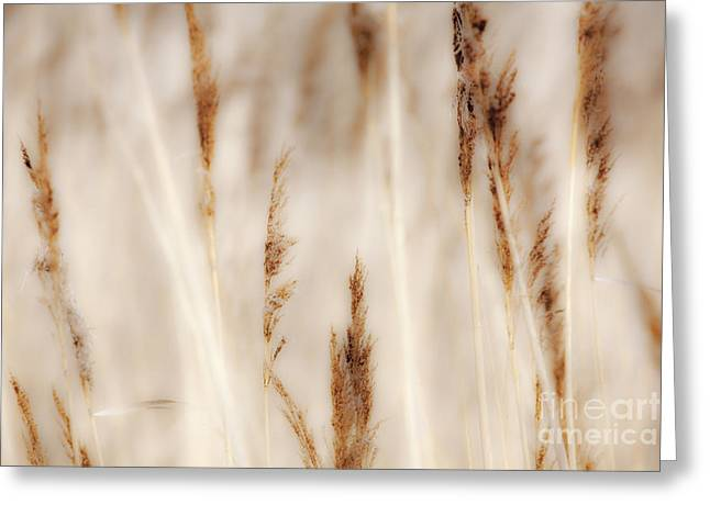 Paint Photograph Greeting Cards - Grass and Reeds - Outer Banks North Carolina Greeting Card by Dan Carmichael