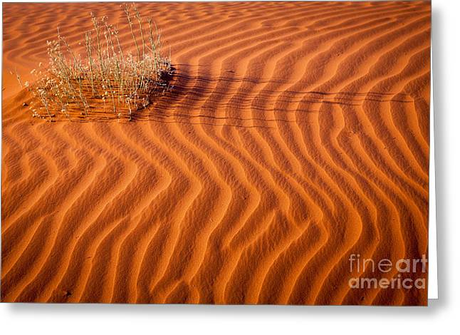 Grass And Ripples Greeting Card by Inge Johnsson