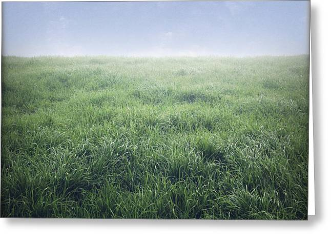 Grasses Greeting Cards - Grass and sky  Greeting Card by Les Cunliffe