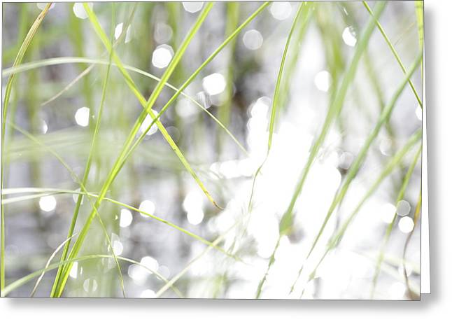 Sensitivity Greeting Cards - Grass and sun reflections in a lake - available for licensing Greeting Card by Intensivelight