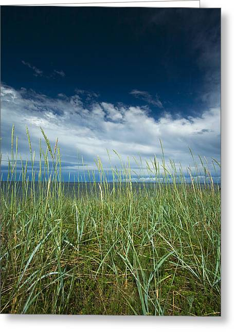 North Shore Pyrography Greeting Cards - Grass and the blue sky Greeting Card by Anna Grigorjeva