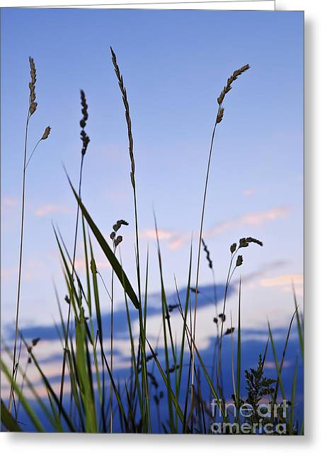 Lawns Fields Greeting Cards - Grass at sunset Greeting Card by Elena Elisseeva