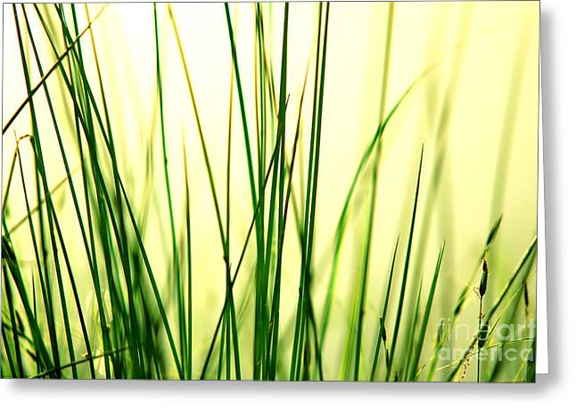 Grass Background Greeting Card by Michal Bednarek