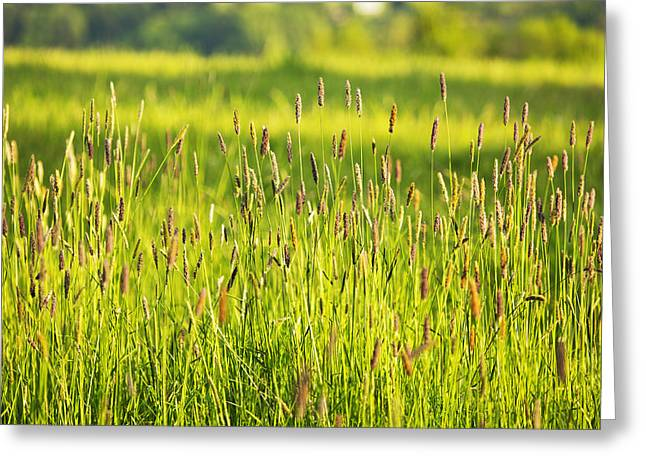 Art Of Vital Greeting Cards - Grass Greeting Card by Belinda Greb