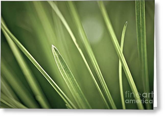 Grass Blade Greeting Cards - Grass blades abstract  Greeting Card by Elena Elisseeva